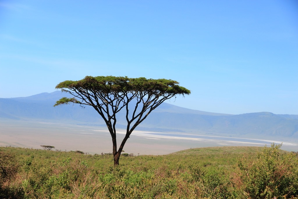 Ngorongoro Crater 008