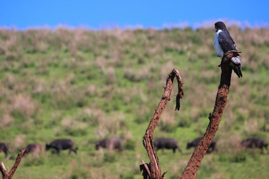 Ngorongoro Crater 011