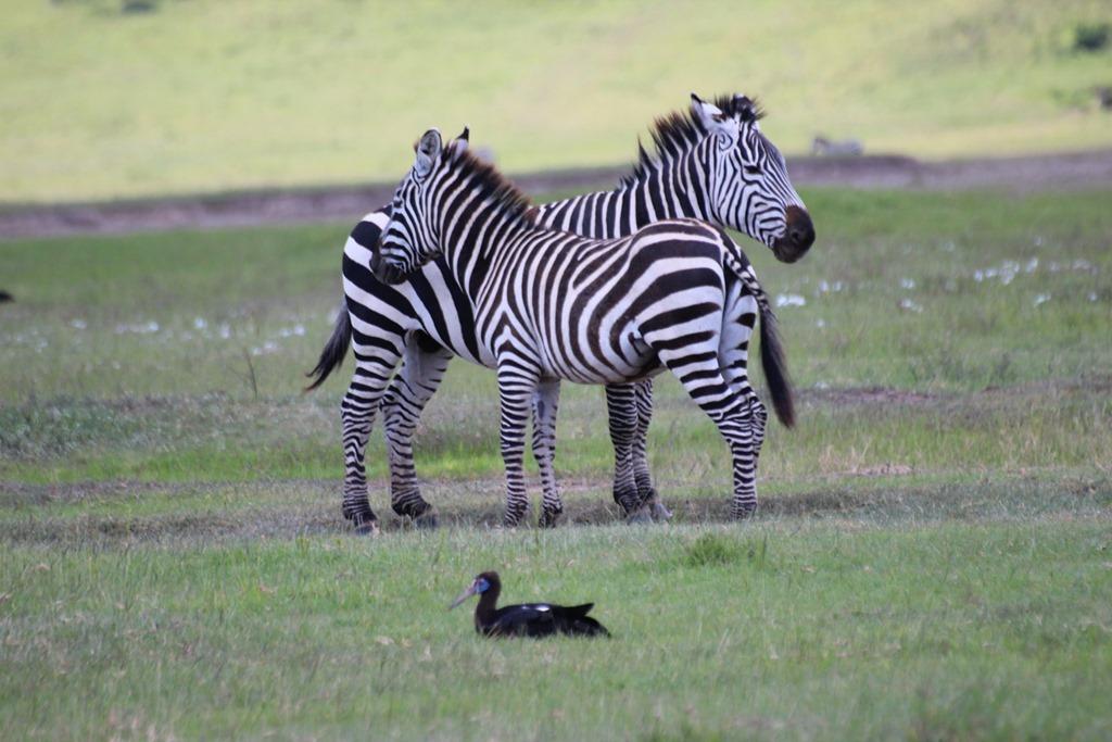 Ngorongoro Crater 016