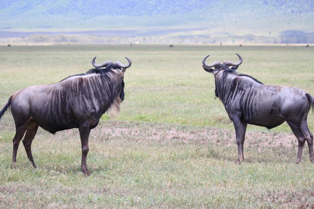 Ngorongoro Crater 019