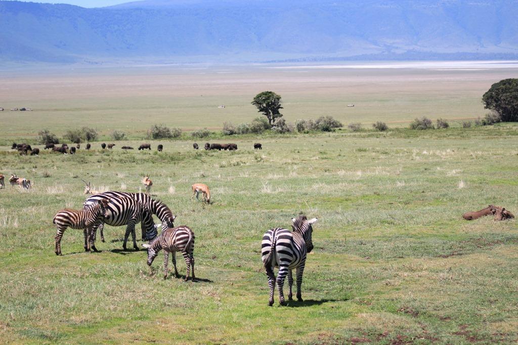 Ngorongoro Crater 024