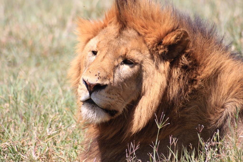 Ngorongoro Crater 026
