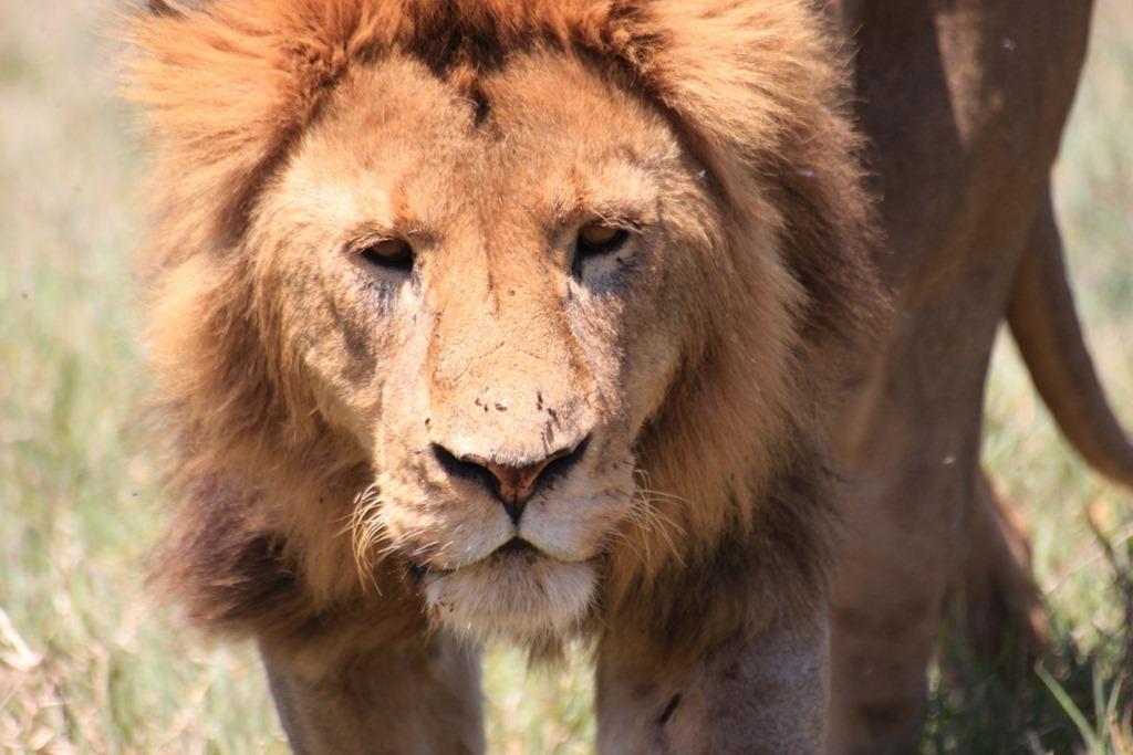 Ngorongoro Crater 028