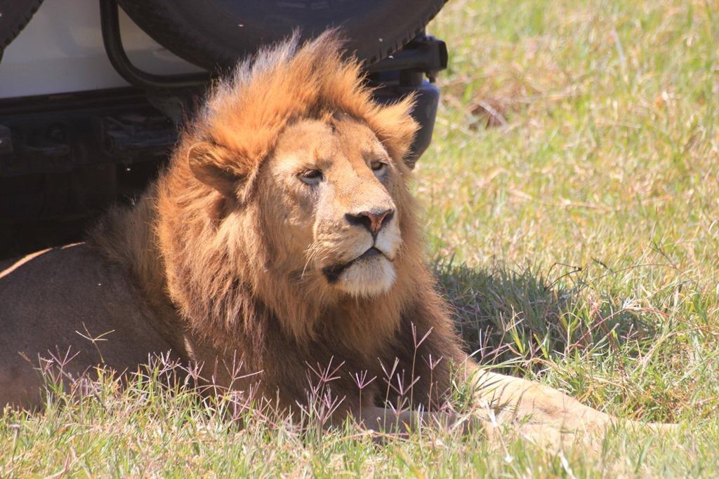 Ngorongoro Crater 032