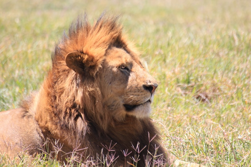 Ngorongoro Crater 034