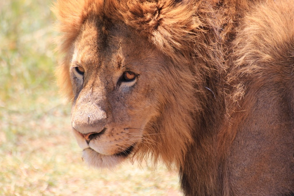 Ngorongoro Crater 037