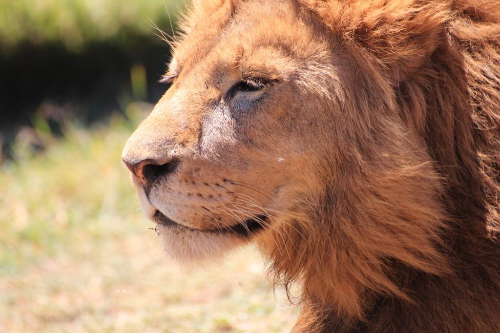 Ngorongoro Crater 038