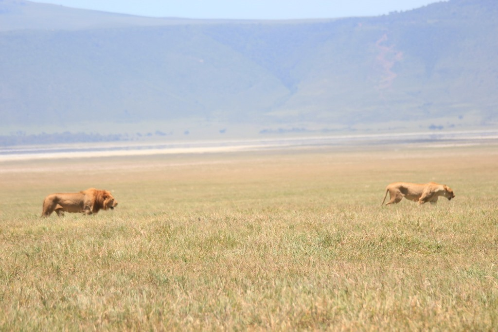 Ngorongoro Crater 039