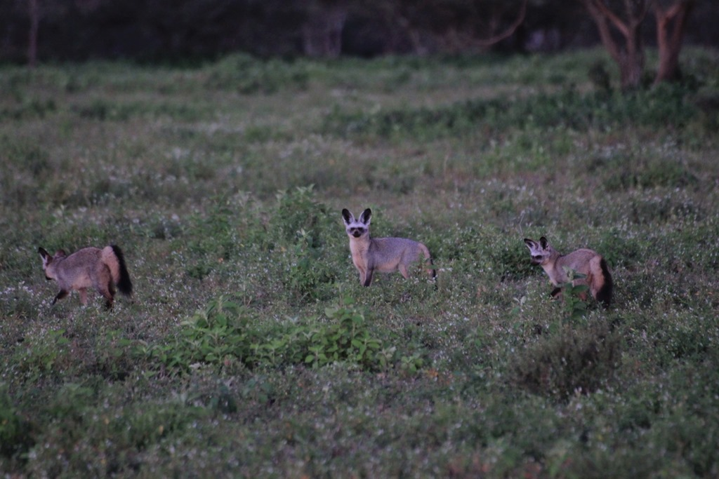 Ngorongoro Park Day 2 001