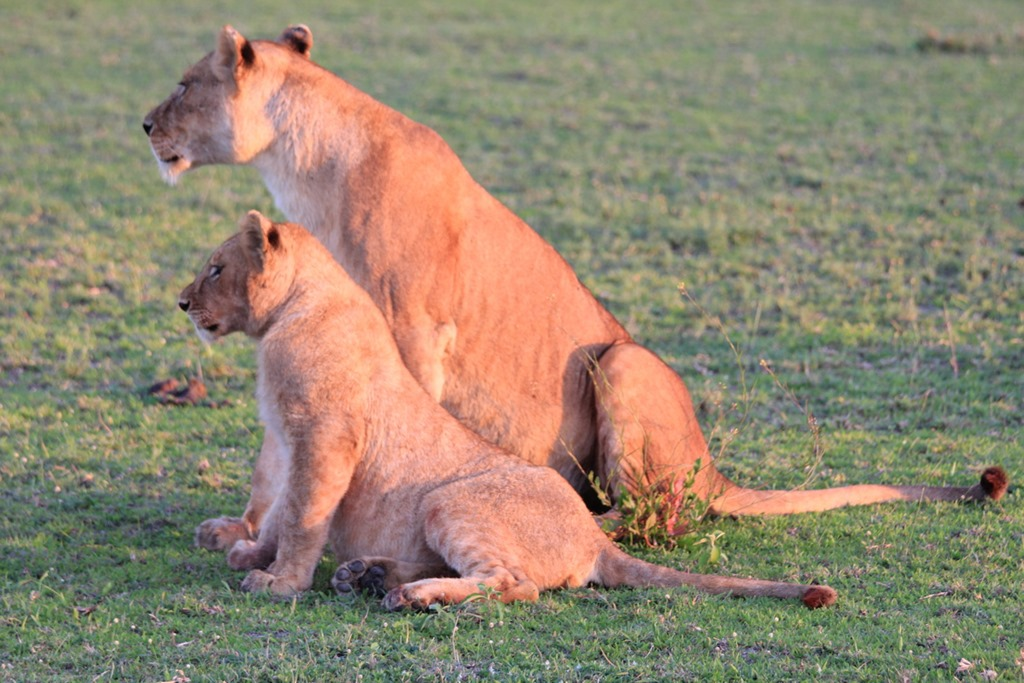 Ngorongoro Park Day 2 003