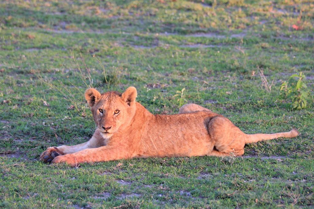 Ngorongoro Park Day 2 004