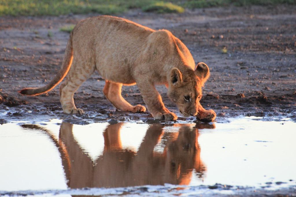 Ngorongoro Park Day 2 005
