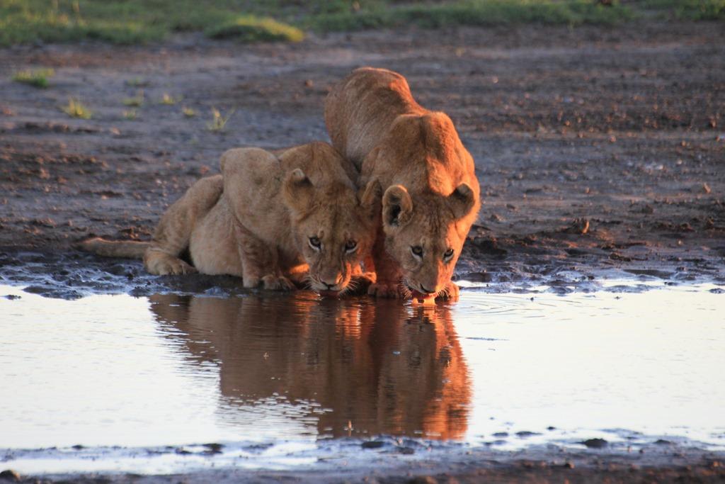Ngorongoro Park Day 2 006