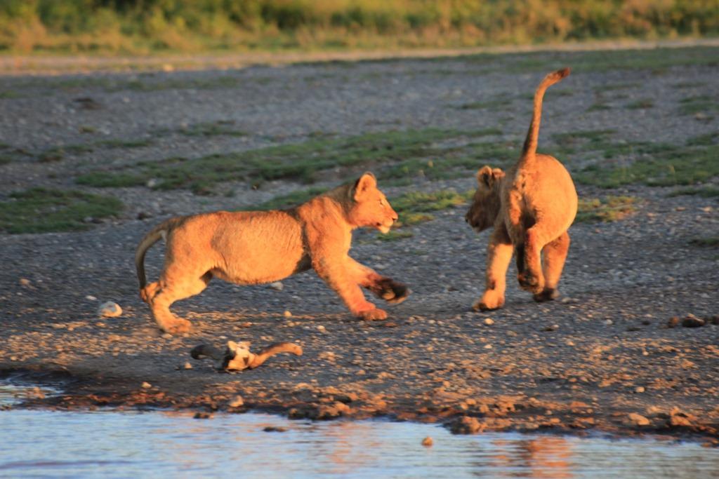 Ngorongoro Park Day 2 008