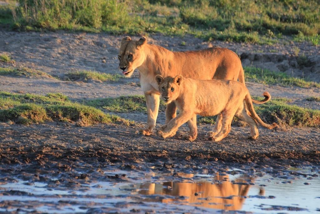Ngorongoro Park Day 2 009
