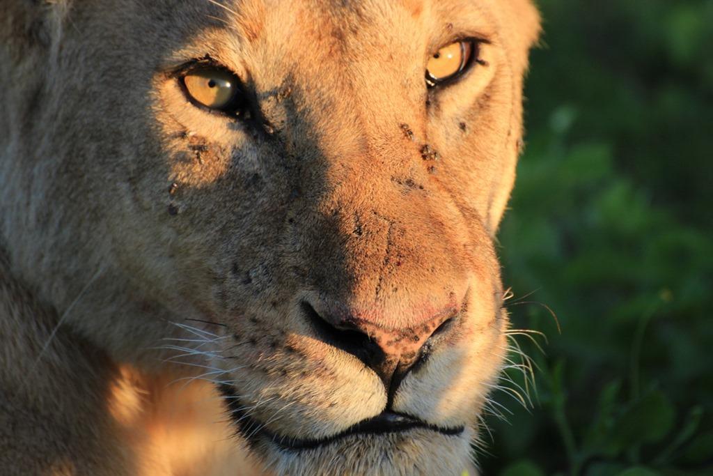 Ngorongoro Park Day 2 010