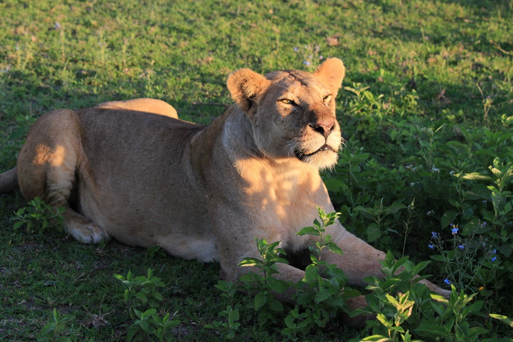 Ngorongoro Park Day 2 011