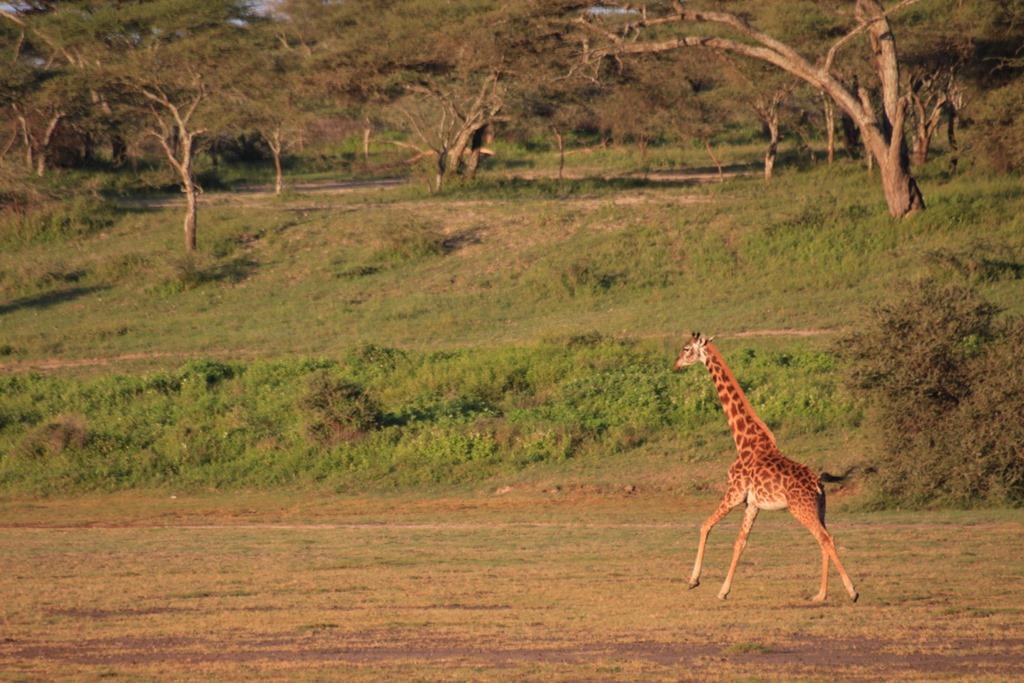 Ngorongoro Park Day 2 014