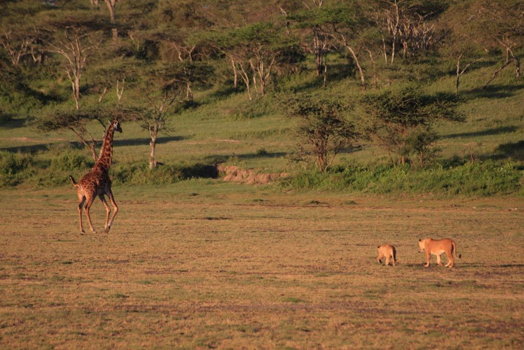 Ngorongoro Park Day 2 015