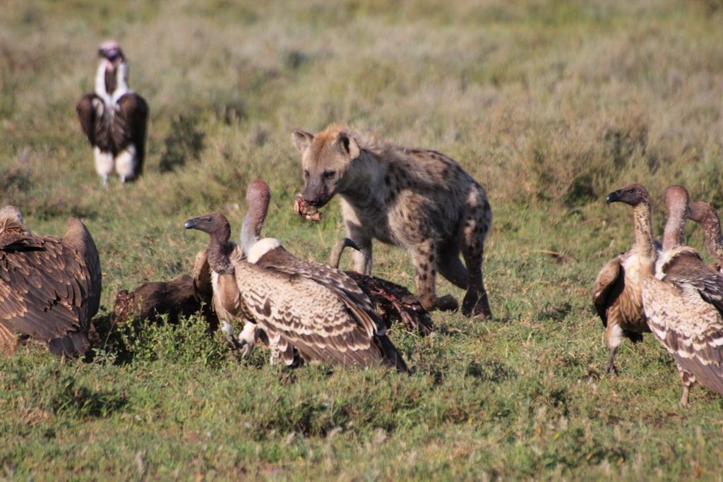 Ngorongoro Park Day 2 020