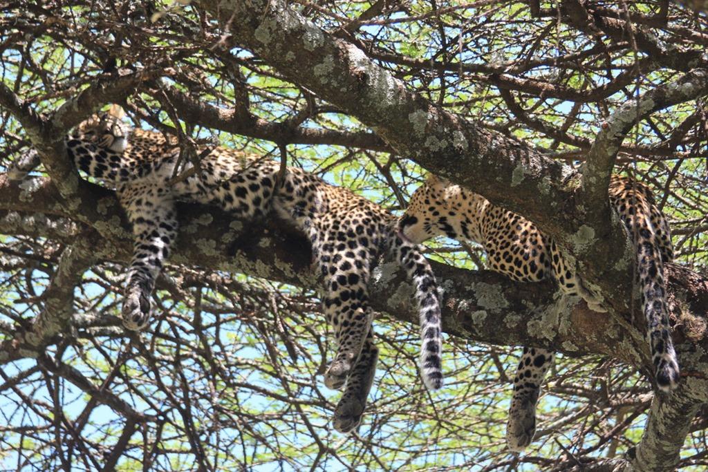 Ngorongoro Park Day 2 023