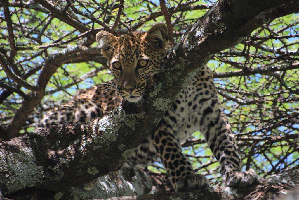 Ngorongoro Park Day 2 025