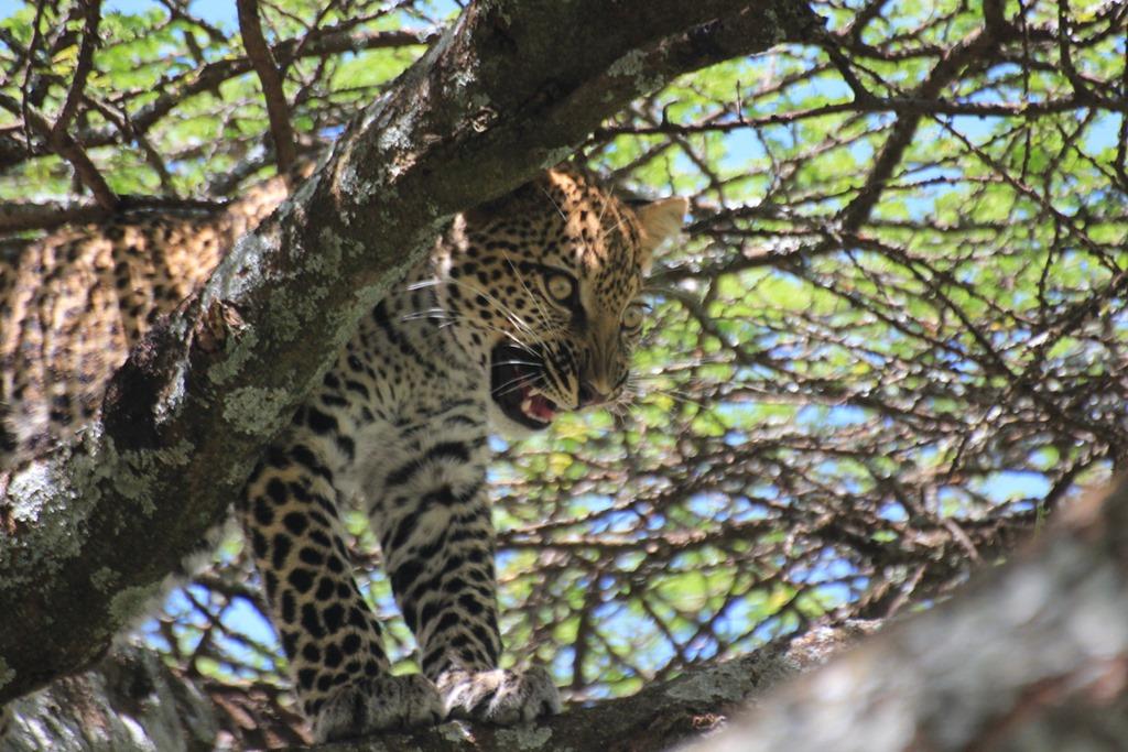 Ngorongoro Park Day 2 026