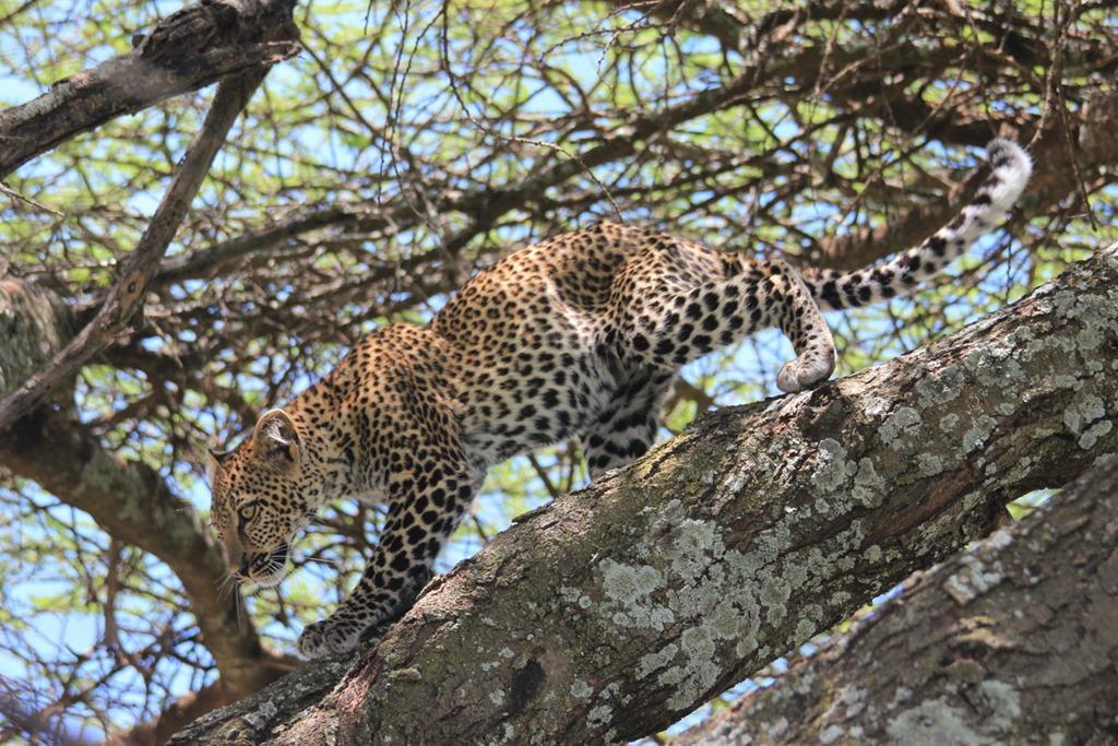 Ngorongoro Park Day 2 028