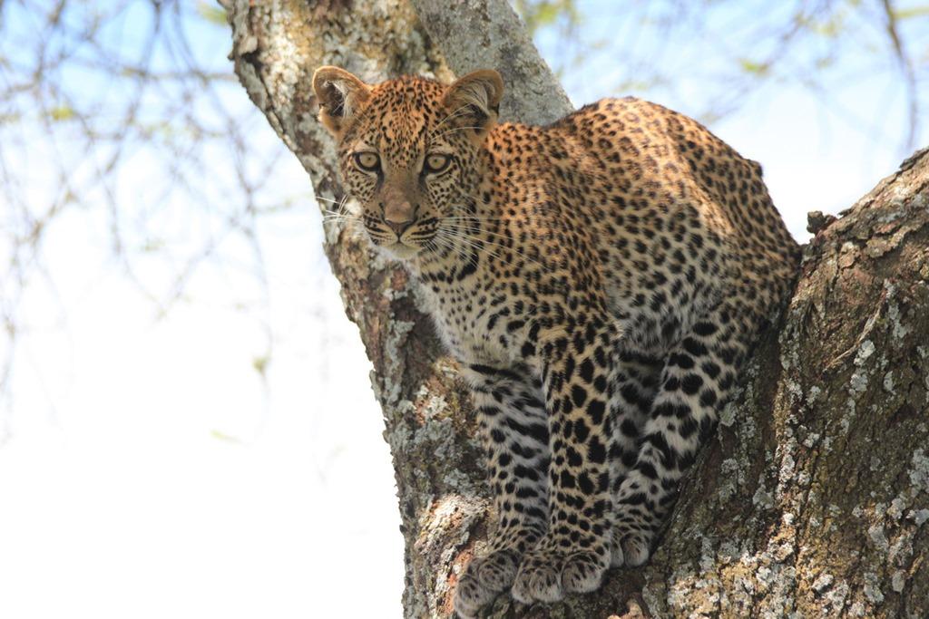 Ngorongoro Park Day 2 029