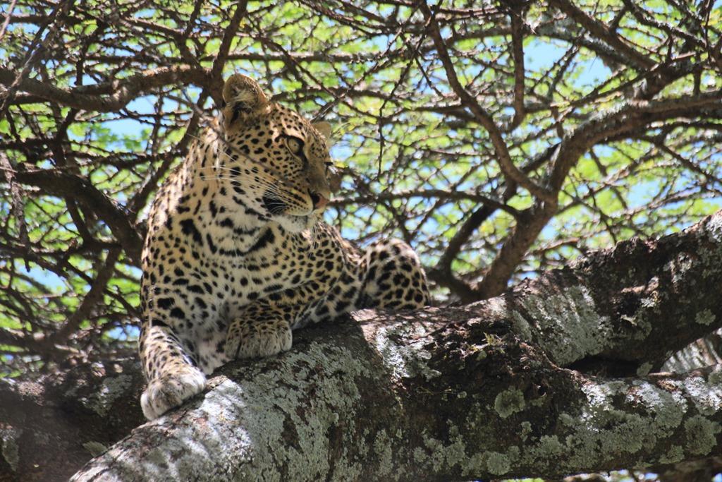 Ngorongoro Park Day 2 034