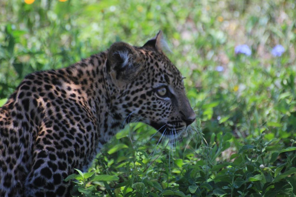 Ngorongoro Park Day 2 038