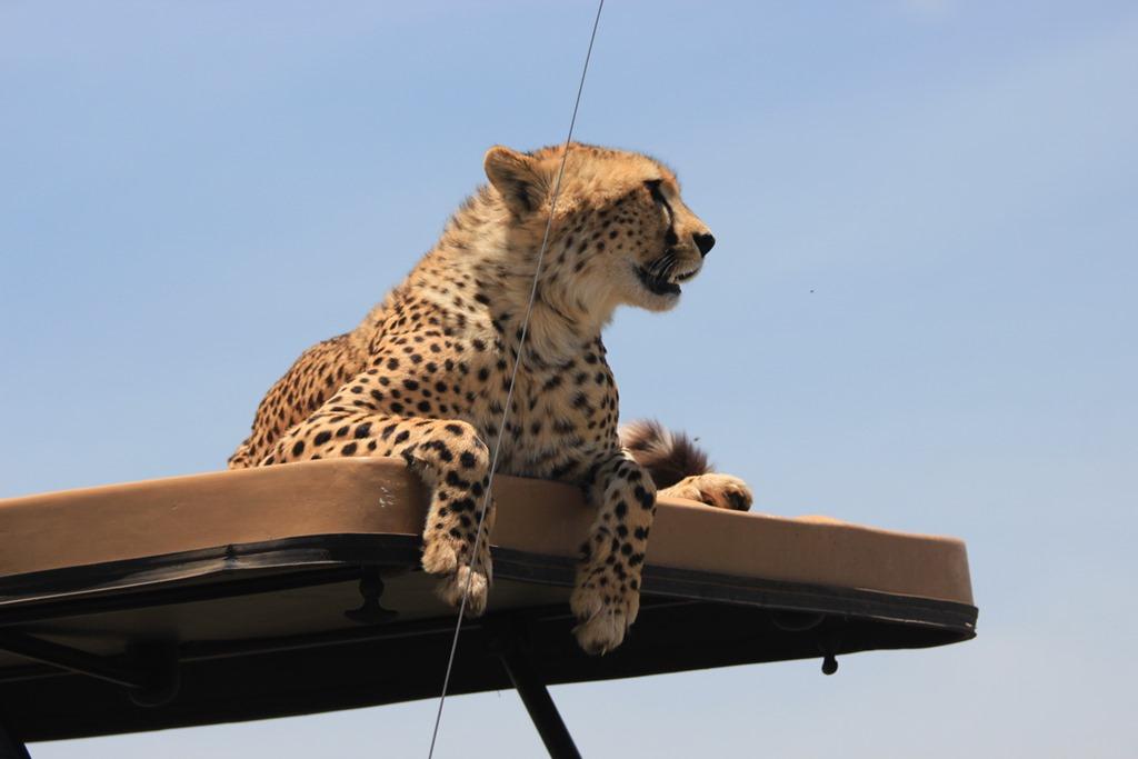 Ngorongoro Park Day 2 040