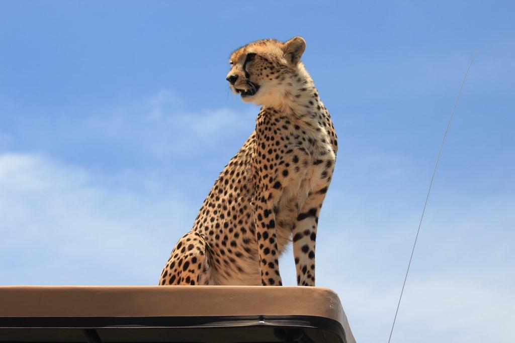 Ngorongoro Park Day 2 042
