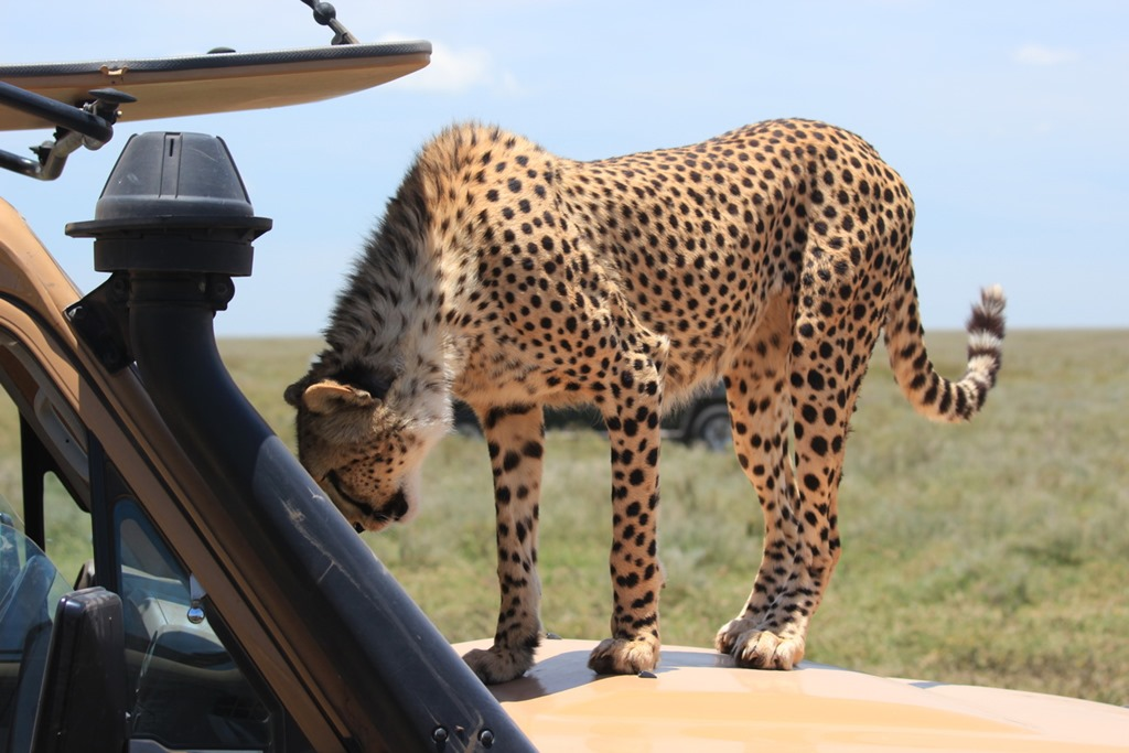 Ngorongoro Park Day 2 046
