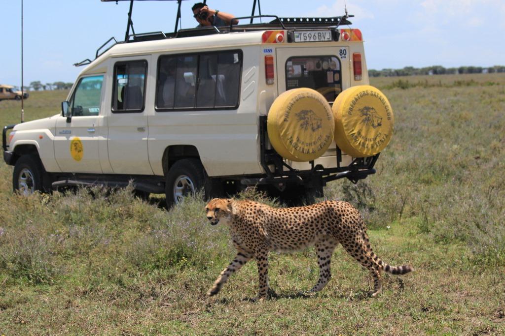 Ngorongoro Park Day 2 048