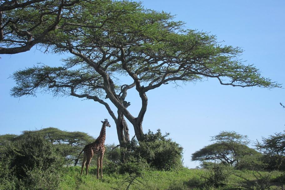 Ngorongoro Park Day 2 050