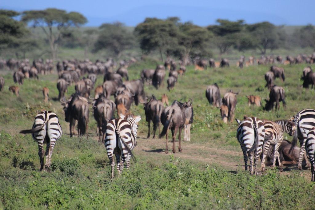 Serengeti 001