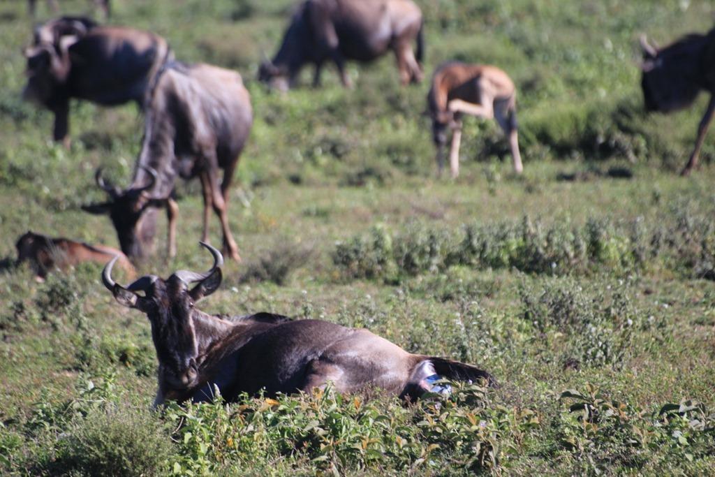 Serengeti 005
