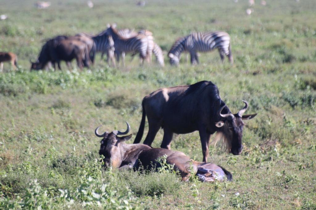 Serengeti 006