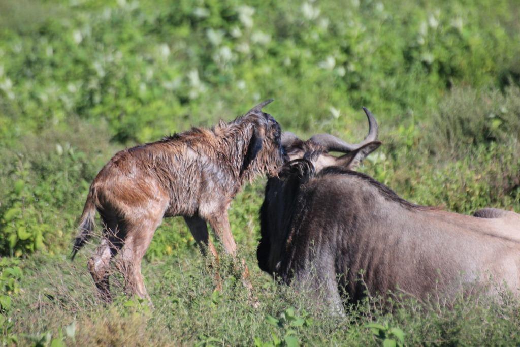 Serengeti 010