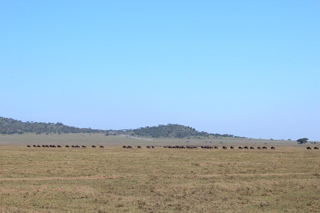 Serengeti 019