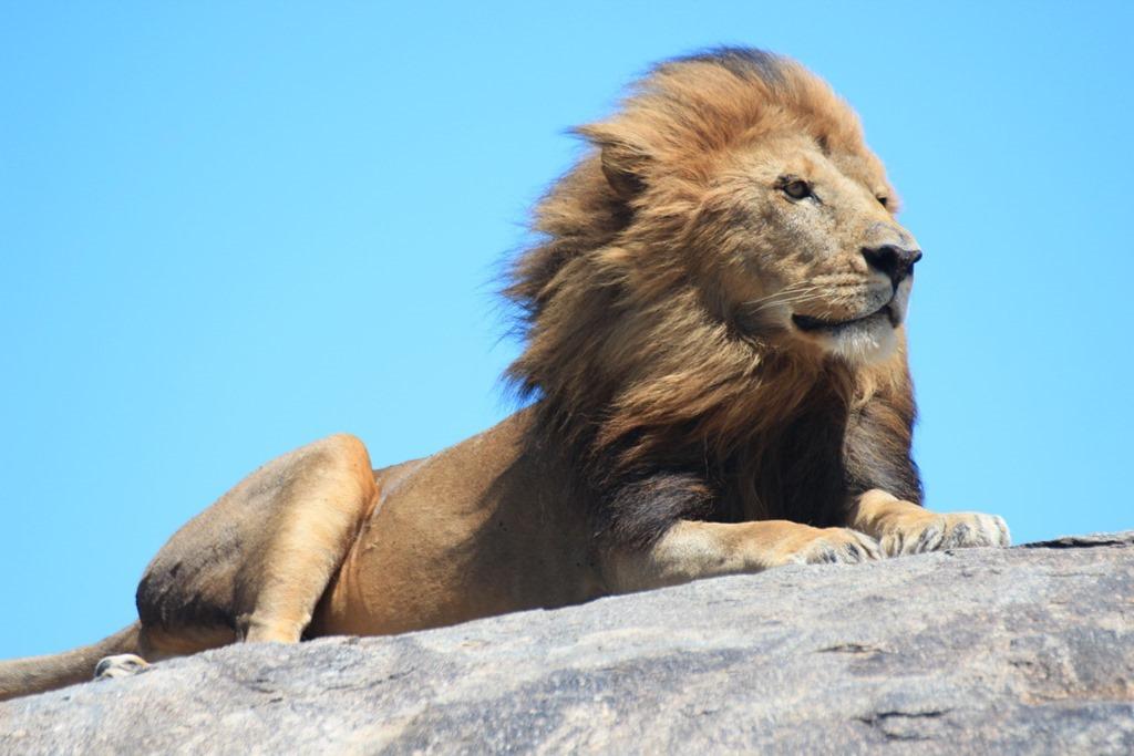 Serengeti 030