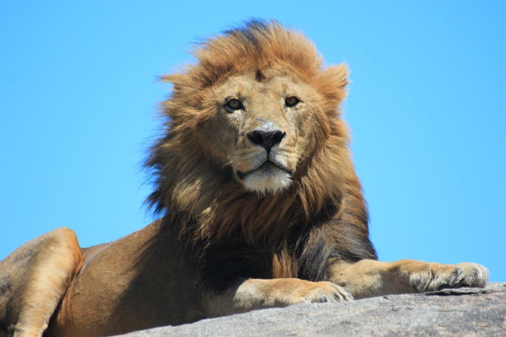 Serengeti 032