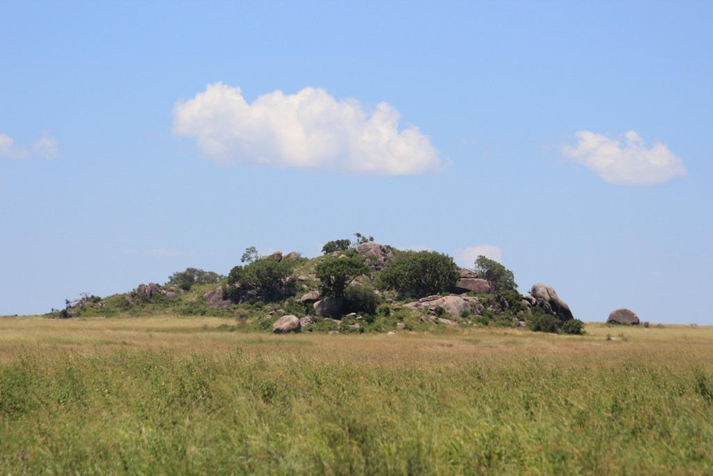 Serengeti 033