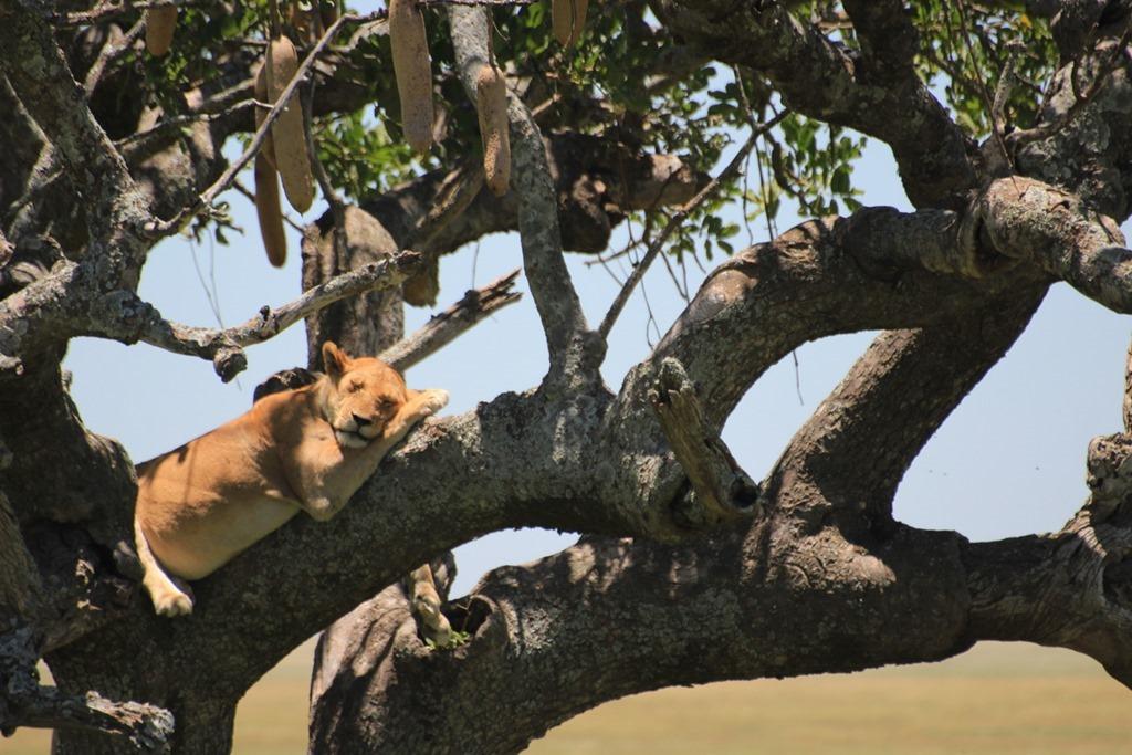 Serengeti 034