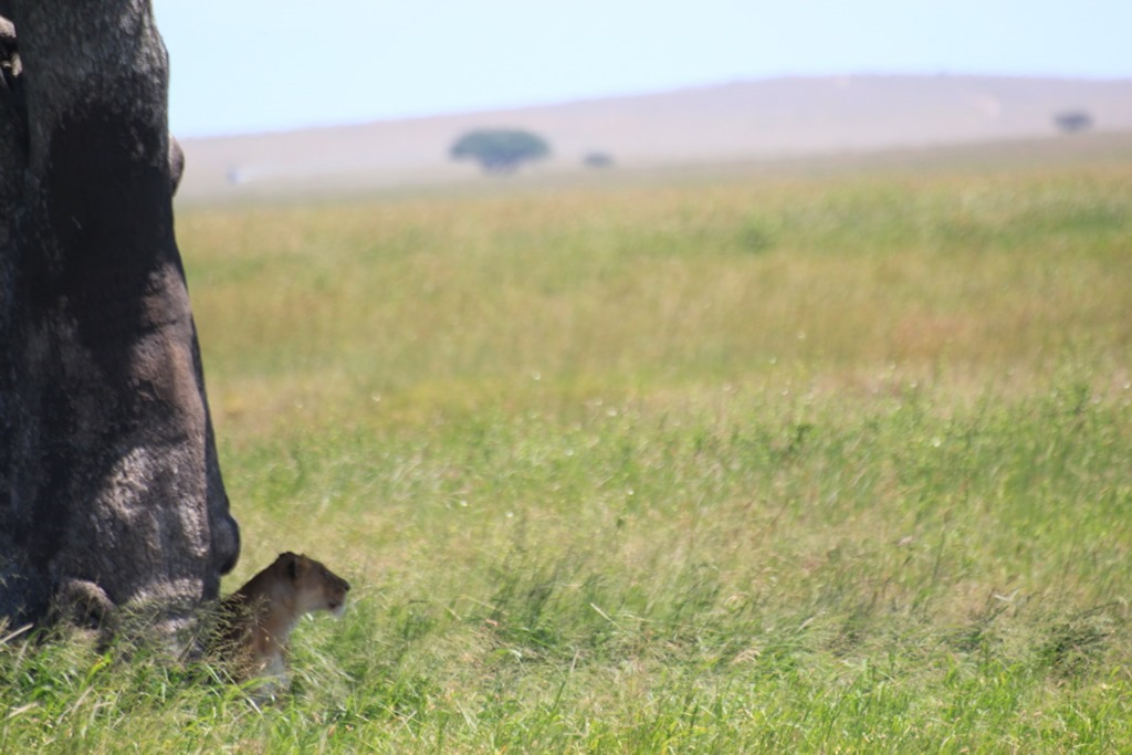 Serengeti 037