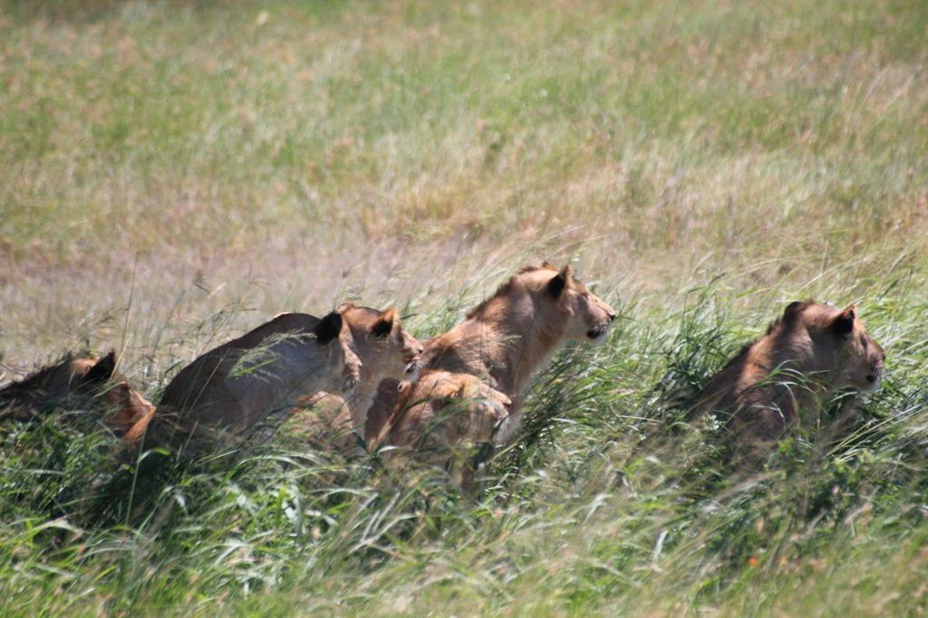 Serengeti 038