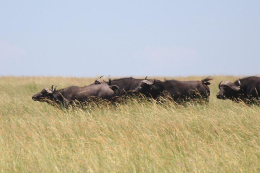 Serengeti 040