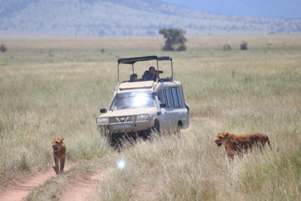 Serengeti 041