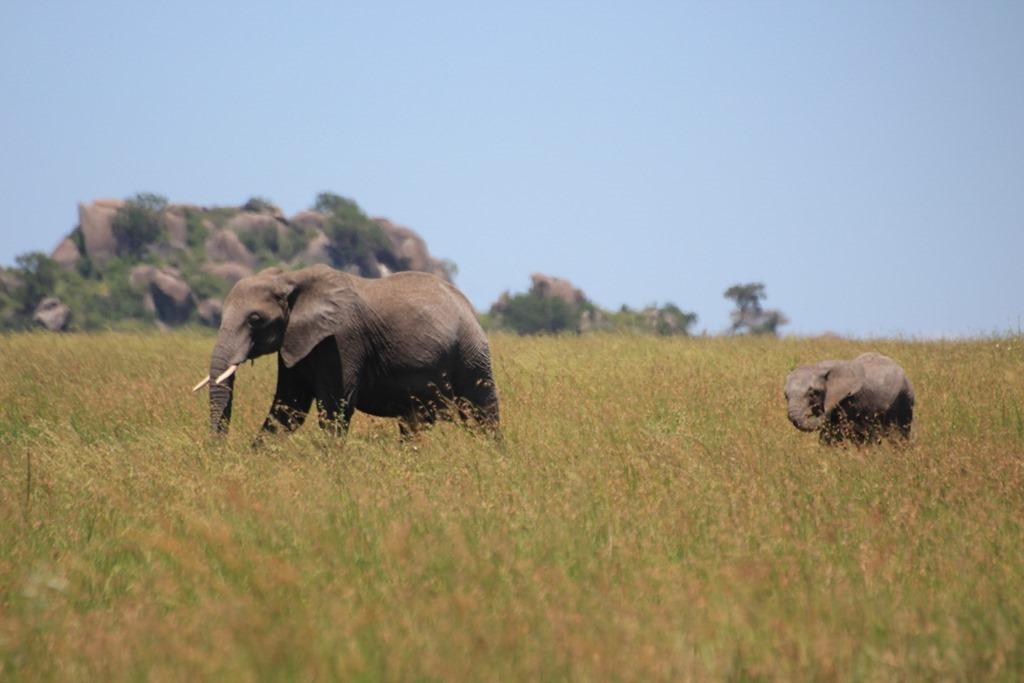 Serengeti 045
